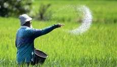 Semangat Hari Tani untuk Meningkatkan Produksi Padi